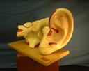 Model of Ear